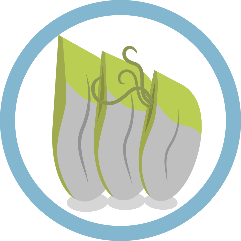 barnacles logo